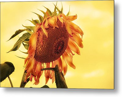 Metal Print featuring the photograph Sunny by Kathleen Stephens