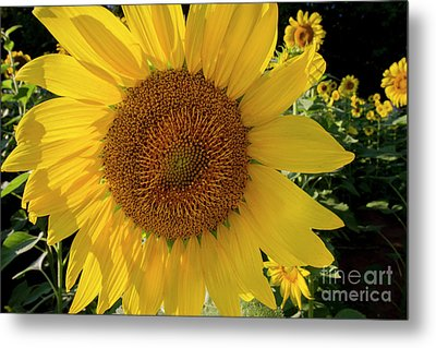 Metal Print featuring the photograph Sunny Side Up by Chris Scroggins