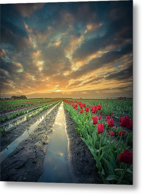 Metal Print featuring the photograph Sunrise At Tulip Filed After A Storm by William Lee