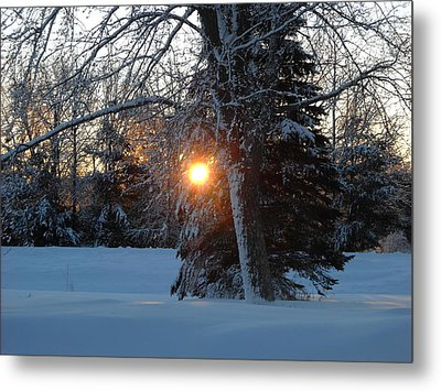 Sunrise Through Branches Metal Print