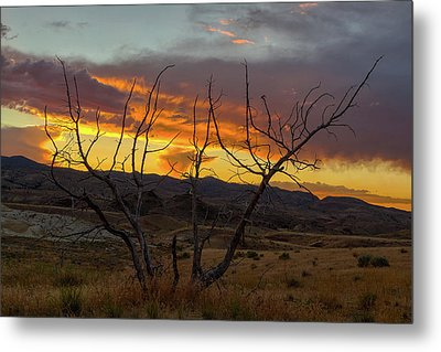 Sunset And Petrified Tree Metal Print by David Gn