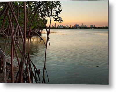 Sunset At Miami Behind Wild Mangrove Forest Metal Print by Matt Tilghman