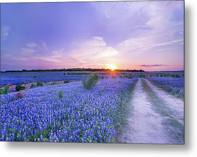 Sunset At The End Of Bluebonnet Field - Texas Metal Print by Ellie Teramoto