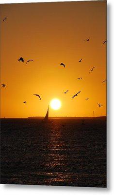 Sunset Birds Key West Metal Print