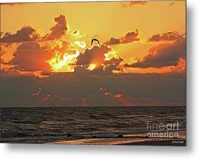 Sunset Splendor Metal Print by Terri Mills