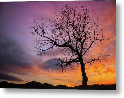 Metal Print featuring the photograph Sunset Tree by Darren White