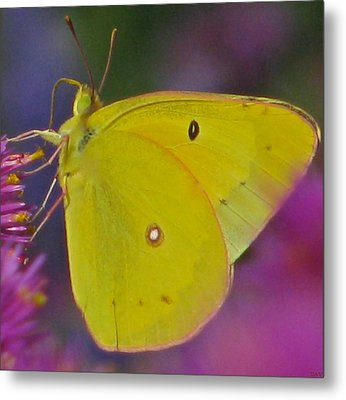 Sunshine Wings Metal Print