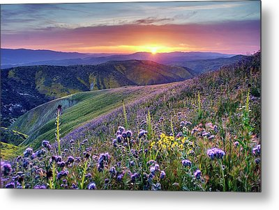 Metal Print featuring the photograph Super Bloom In California Desert by Peter Thoeny