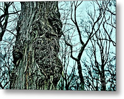 Super Tree Metal Print by Sandy Moulder