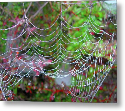 Surfing The Web Metal Print by Randy Rosenberger