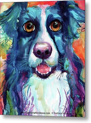 Surprised Border Collie Watercolor Metal Print