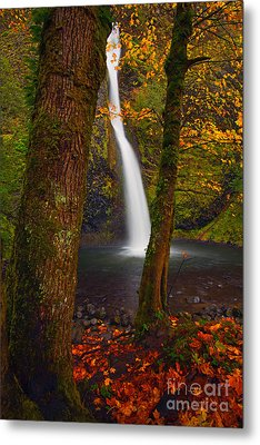 Surrounded By The Season Metal Print by Mike  Dawson