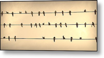 Swallows On Wires Metal Print by Radoslav Nedelchev