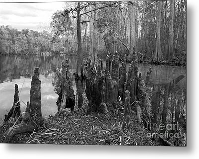 Swamp Stump Metal Print