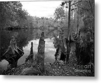 Swamp Stump II Metal Print