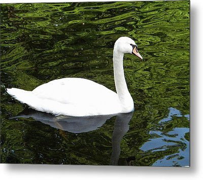 Metal Print featuring the photograph Swan by Manuela Constantin