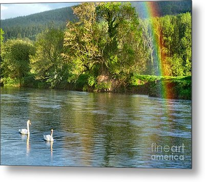 Swans And Double Rainbow 1 Metal Print by Debra Collins