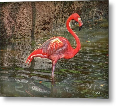 Metal Print featuring the photograph Symbol Of Florida by Hanny Heim