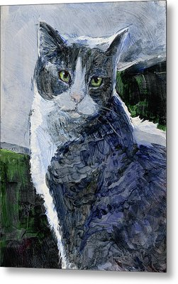 Tabby In A Blue Room Metal Print