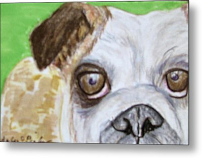 Take Me Home - Bulldog Metal Print by Barbara Giordano