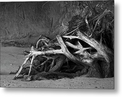 Metal Print featuring the photograph Tangled Knots - Tree Roots by Jane Eleanor Nicholas