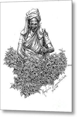 Tea Picker Metal Print by Manjula Karunathilaka