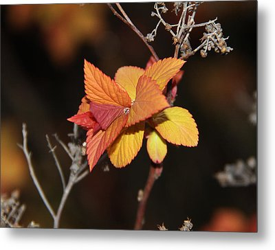 Metal Print featuring the photograph Tear by Sergey and Svetlana Nassyrov