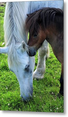 Metal Print featuring the photograph Telling Secrets by Mike Martin