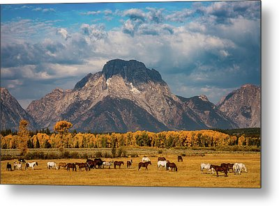 Metal Print featuring the photograph Teton Horse Ranch by Darren White
