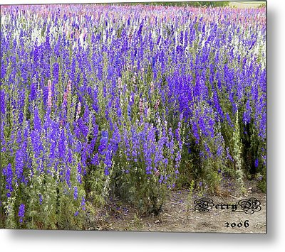 Texas Wildseed Farm Metal Print