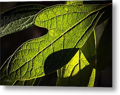 Textured Glow Metal Print by Christopher Holmes