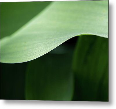 The Allure Of A Curve - Metal Print