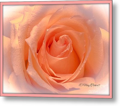 The  Beauty Of A Rose  Copyright Mary Lee Parker 17,  Metal Print