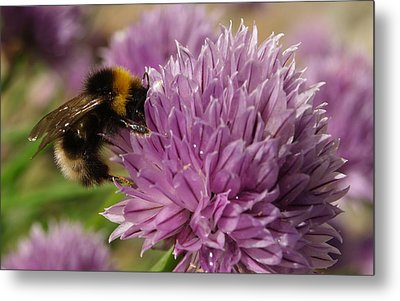 Metal Print featuring the photograph The Bees Are Back In Town II by Michael Canning