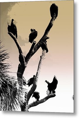 Metal Print featuring the photograph The Birds by Laura DAddona