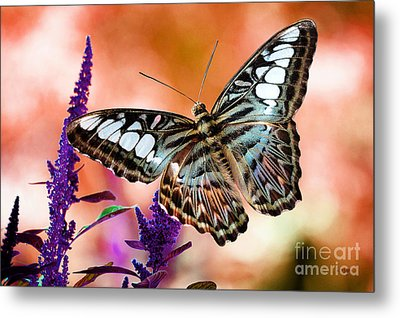 The Blue Clipper Metal Print by Lois Bryan