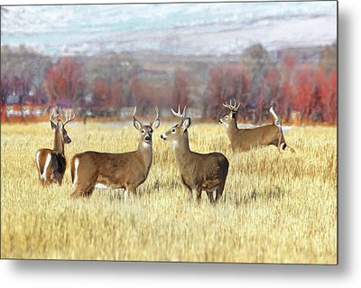 Metal Print featuring the photograph The Bucks Stop Here White-tail Deer  by Jennie Marie Schell