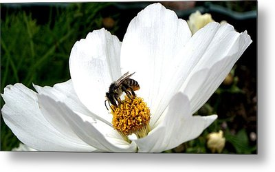 The Busy Bee Metal Print by Carol Grimes