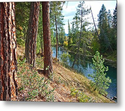 The Creek Metal Print by Nancy Harrison