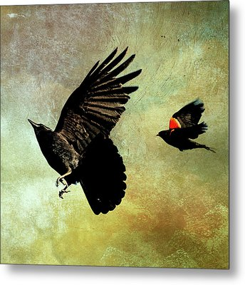 The Crow And The Blackbird Metal Print by Peggy Collins