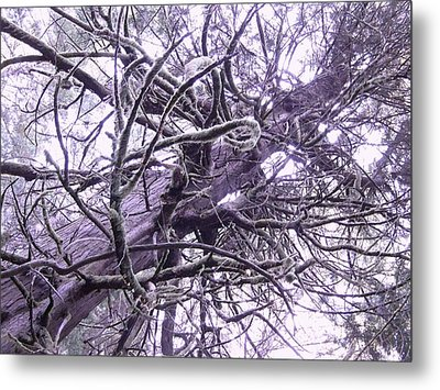 The Deception Tree Metal Print by Angi Parks