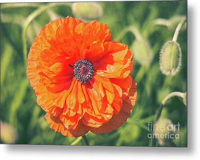 The Face Of A Poppy Metal Print