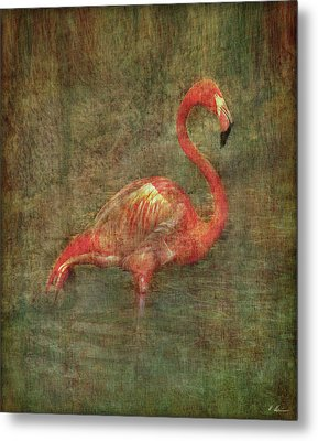 Metal Print featuring the photograph The Flamingo by Hanny Heim