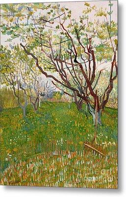 The Flowering Orchard, 1888 Metal Print by Vincent Van Gogh