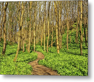 The Garlic Forest Metal Print by Roy McPeak