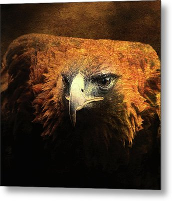 The Golden Hawk Locks On Target . Square . R3593 Metal Print by Wingsdomain Art and Photography