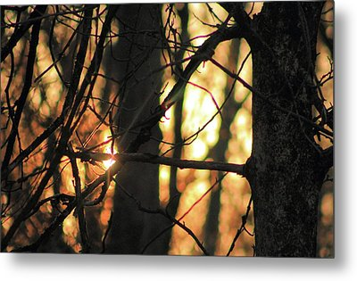 Metal Print featuring the photograph The Golden Hour by Bruce Patrick Smith