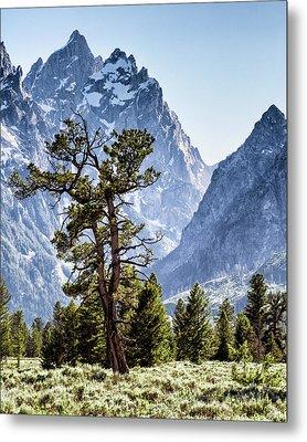 The Grand Teton With Pine And Sage Metal Print