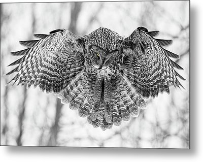 Metal Print featuring the photograph The Great Grey Owl In Black And White by Mircea Costina Photography