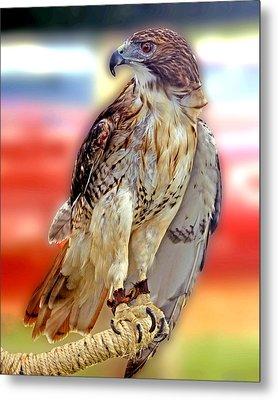 The Hawk Metal Print by Joseph Williams